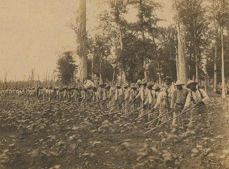 Parchman Penal Farm 1911